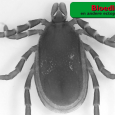 De-zwarte-luis-een-geduchte-tegenstander---Bloedluis-en-andere-ectoparasieten